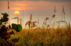 Gulf Coast Sunset (ap0013) Tags: ocean sunset anna gulfofmexico water america mexico island gulf florida maria explore annamariaisland floridasunset gulfsunset