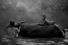 b&w (yothin_insuk) Tags: boy sun thailand buffalo father dramatic nakorn sakon