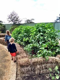 The Briars - Eco House garden