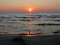 Sonnenaufgang am 09.08.2014 (Manuela Vierke) Tags: bird sunrise deutschland gull balticsea vgel rgen mwe ostsee vogel sonnaufgang 09082014