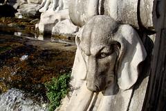 neapel 20 (mcorreiacampos) Tags: italien italy garden italia skulptur escultura hund cachorro jardim garten barock npoles neapel barroco caserta nurderschnheitwegen