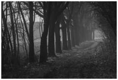 *** (Spartaxus) Tags: netherlands morning bw road nature limburgy trees tmax pentax mesuper light analog