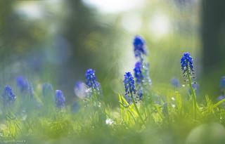 Springfeeling
