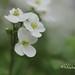 fleur 0362