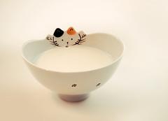 naughty 🐾 (gian_tg) Tags: smileonsunday animalpaws bowl milk kitty cat 7dwf fauna paws