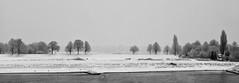 Winter ade! (TablinumCarlson) Tags: leica m 90m summicron volmerswerth düsseldorf dusseldorf ddorf nrw germany deutschland nw north rhinewestphalia duesseldorf rheinland nordrheinwestfalen neuss grimlinghausen rhein novesia flus river baum tree sw schnee snow winter winterade liecam m240