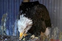 (68) Liberty's Owl Raptor & Reptile Centre