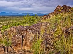 Three Rivers Petroglyph Site, New Mexico (www.clineriverphotography.com) Tags: rockart threeriverspetroglyphsite peoples jornadamogollan newmexico location 2014 usa petroglyph