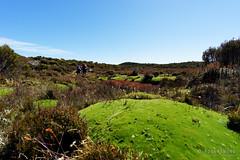 20170228-06-Cushion plants (Roger T Wong) Tags: australia centralplateauconservationarea greatpinetier np nationalpark sel1635z sony1635 sonya7ii sonyalpha7ii sonyfe1635mmf4zaosscarlzeissvariotessart sonyilce7m2 tasmania wha wallsofjerusalem worldheritagearea bushwalk camp centralhighlands cusionplants hike hikers trektramp walk