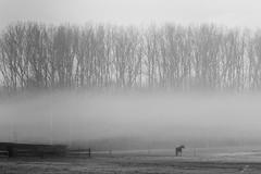 Morning Haze (Jan Moons) Tags: morning mist haze horse nature forest trees fog sony sonya6000 blackandwhite blacknwhite blackwhite monochrome belgium haacht stable