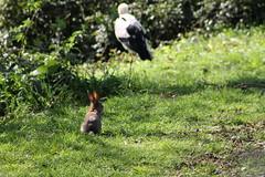 IMG_1855 (marianabmcruz) Tags: parquebiológicodegaia parquebiológico biologicalpark outdoors outdoor nature natureza animal animals fauna bird birds cegonha cegonhas stork storks coelho rabbit