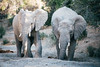 Kuzuko Elephant Pack II