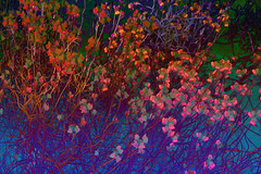 Psychedelic Spring (bethrosengard) Tags: bethrosengard photomanipulation digitallyenhanced photoart digitalmagic digitalart