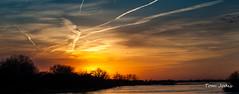 Sandhill Cranes (Tom Jodis) Tags: sunset sandhillcranes platteriver nebraska migration
