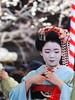 Baikaisai '17 050.jpg (crazybluepanda) Tags: baikasai japan kyoto festival maiko matsuri 梅花祭 kyōtoshi kyōtofu jp