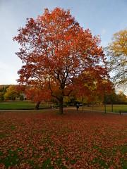 P1140762 (TaffTravels10) Tags: derbyshire buxton autumn