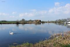 De Vecht bij Ankeveen (bcbvisser13) Tags: panorama landschap rivier zwaan woonboot vecht stichtsevecht provutrecht nederland eu