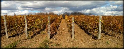 hubs vineyard