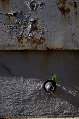 Life Will Find A Way (Ranford Stealth) Tags: urbandecay prison fremantle fuji1855f284 fujixt1