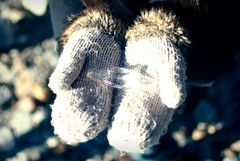 Gloves (Lallyy86) Tags: christmas xmas winter snow cold ice vintage nikon retro gloves neve inverno natale freddo stalactite ghiaccio stalattite