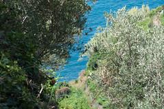 L1010890 (Darren and Brad) Tags: italy italia cinqueterre vernazza italianriviera
