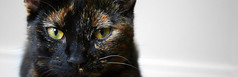Luna (ambeizzi) Tags: pet cute eye love animal cat hair eyes kitten small pussy stripe kitty fluffy luna whiskers whisker aww pussycat