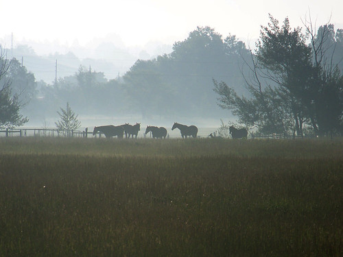 Photo - Horses in the fog - photo by Kelly Idema
