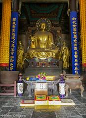 Zhengding_Hebei_China_2006_ Melissa Donaghue-2331 (daisyvisionxxx) Tags: china temple gold buddha statues 2006 altar hebei  goldenbuddha   zhengding hebeiprovince  longxingtemple melissadonaghue  hallofmahamuni manichaeanhall