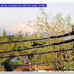 Crazy squirrel wandering by means of electrical cables thumbnail