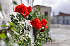 Walking home... (dimitra_milaiou) Tags: life street flowers light red people house love home nature beautiful architecture island greek happy spring nice nikon missing holidays europe day village d walk memories hellas happiness visit greece thoughts together hora poppy poppies 90 chora andros cyclades dimitra d90 δήμητρα milaiou μηλαίου