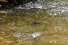 2014_Bihar_csaldi_1178 (emzepe) Tags: creek river vale val valley submerged tal kirnduls fleuve roumanie apuseni nyugati bihar 2014 patak nyr rumnien jnius csaldi judetul bihor hegyek bihari muntii flus vz tutaj haj hegysg foly galbena ves megye romnia hullmok verseny kzs vlgy erdlyi krs vlgye kves galbina szik szigethegysg kzphegysg karszthegysg elmerlt hajptsi