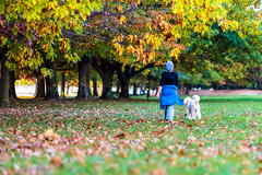Walking Duo (David Tao Photography) Tags: autumn people woman dog tree fall leaves animal walking healthy colorful afternoon outdoor lifestyle australia canberra active