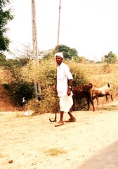 Farmers (Vrajeshjani) Tags: india cows farmers farmer gujarat villagers indianvillage gujaratvillage gujaratfarmers gujaratvillagers