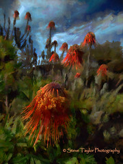 The Invasion (Steve Taylor (Photography)) Tags: blue red sky flower green art clouds flora dramatic