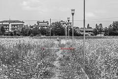 The Pleasure Garden - 8 (Gianluca Vecchi Photography) Tags: park street city urban blackandwhite bw parco architecture garden streetphotography bn urbano architettura biancoenero giardino citt gianlucavecchi potd:country=it thepleasuregarden8