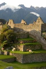 DJB_8455 (tgiacb717) Tags: peru inca ruins awesome machupicchu incatrail peruvian incaruins experienceofalifetime machupicchuperu tgiacb717 june2014 conservationvolunteersinternationalprogram conservationvip