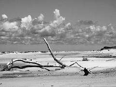 beach (Darek Drapala) Tags: trees light sea sky blackandwhite bw seascape tree beach beauty clouds landscape lumix blackwhite space poland polska panasonic g2 seashore skyskape panasonicg2