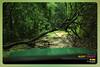 Silent Valley---------------06 (Binoy Marickal) Tags: india green tourism nature water rain kerala mala palakkad evergreenforest treaking silentvalleynationalpark nilgirihills mannarkkad mukkali kuzhur indiabinoymarickal