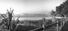My slice of heaven (THE SMOKING CAMERA HeRvEy BaY davefryer) Tags: travel bw white black art beach water 50mm photo blackwhite seaside flickr image pano australia panoramic winner queensland whales torquay herveybay overseas frasercoast 1stprize canon6d shutterbugtipstricks
