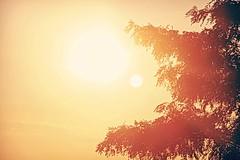 Squint (Digital_Third_Eye) Tags: trees orange sun wisconsin canon flickr bright 2014 danecounty 650d digitalthirdeyes