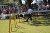 DSC_0228 (Clube de Cãompo Hotel Fazenda para Cães) Tags: agility jundiaí estimacão clubedecãompo clubedecãompohotelfazendaparacães hotelfazendaparacãesituclubedecãompo
