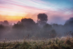 Dawn painting the landscape (Andy Hough Photography) Tags: morning trees sky mist color colour sunrise dawn early glow sony oxfordshire a77 churchmeadow southoxfordshire littlewittenham sonyalpha andyhough earthtrust slta77 sonyzeissdt1680 andyhoughphotography