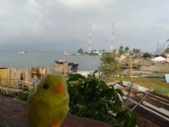 Kuna Yala - Panama (exp_mutare) Tags: islands san panama sanblas blas pintinho kuna guna kunayala akuanusadup