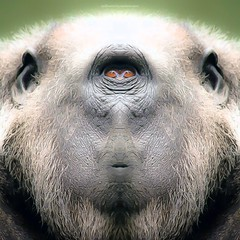 b o r i l l a (epiclectic) Tags: reflection animal photoshop mirror design graphic wildlife humor perspective manipulation images symmetry reflect symmetrical mutant twisted enhancement epiclecticcom epiflection epiflectionbyepiclecticcom