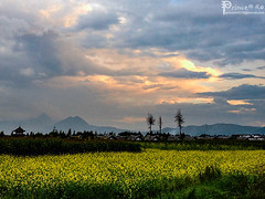 Fields of rape flowers  [iPhone 4S] (Christian Wang | ) Tags: sky mountain flower nature field mobile clouds landscape scenery view yunnan    lijiang    iphone     rapeflower mobilephotography iphoneography