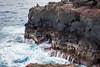 Maui-240 (Photography by Brian Lauer) Tags: ocean maui nakalele nakaleleblowhole nakalelepoint