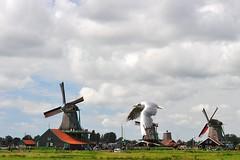 900 (Explored) Zaanse Schans, Netherlands (tango-) Tags: holland nederland olanda hollanda