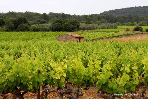 Vineyards 3