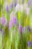 Purple Haze (Minhl84) Tags: park ri flowers abstract blur flower color blurry nikon colorful purple blurred providence rhodeisland motionblur 28 fullframe fx purpleflower lupine rogerwilliamspark 2470mm rogerwilliams 2470 d700 2470mmf28g