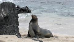 Galapagos - San Cristobal-52